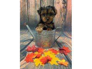 See Our Puppies For Sale Puppies For Sale Puppies Puppy Breeds