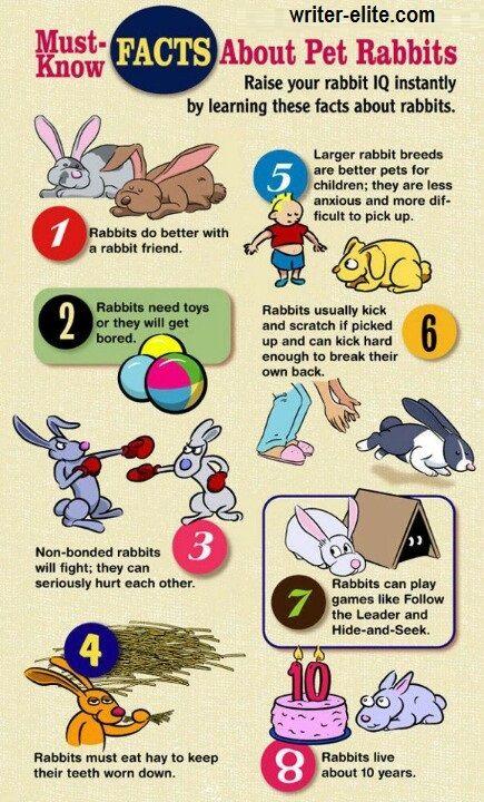 Rabbit care essay university proofreading services usa