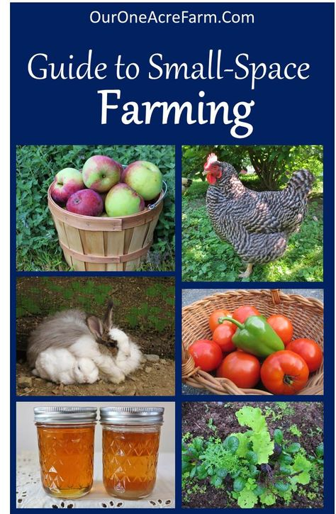 How to Start a Backyard Farm: There are so many options for small space homesteading! This covers space saving gardening, small livestock, foraging, and more.