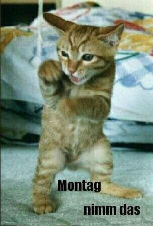 Morgenalle Schon Wach Guten Morgen Katzen Seltsame