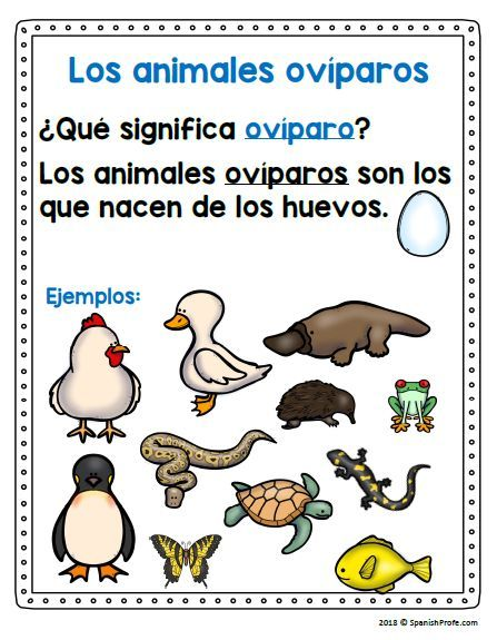 Los Animales Oviparos Oviparous Animals In Spanish Spanish Profe Oviparous Animals Learn French Vocabulary Word Walls