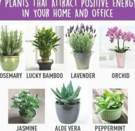 51 Ideas Plants In Bedroom Feng Shui Plants In 2020 Plants Low Light Plants Best Office Plants