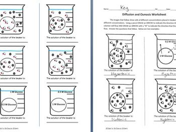 Osmosis and Diffusion Worksheet | Worksheets | Worksheets ...