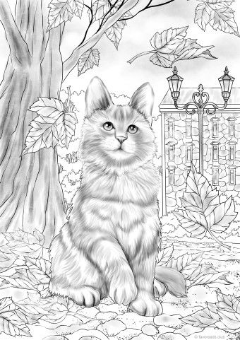 Autumn Kitty Printable Adult Coloring Pages Animal Coloring