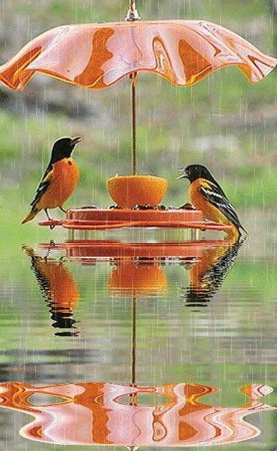 Tamannasanjida I Will Remove Background And Edit Any Photo For 5 On Fiverr Com Beautiful Birds Animals Beautiful Pet Birds