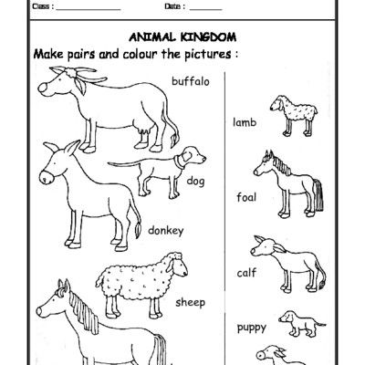 Animal Science Worksheets For 1st Grade