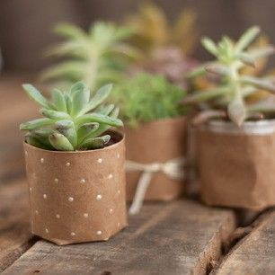 Make tiny plants even cuter with brown paper planters.