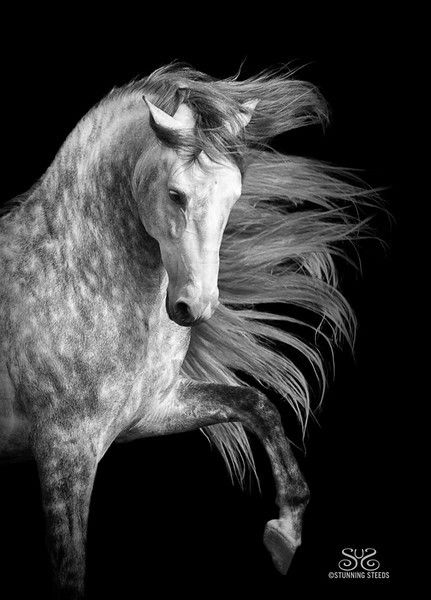 Who wouldn't love horses? They are such beautiful creatures that stare into your soul and make you laugh and cry because they are so beautiful. All The Pretty Horses, Beautiful Horses, Animals Beautiful, Cute Animals, Beautiful Horse Pictures, Beautiful Beautiful, Andalusian Horse, Friesian Horse, Majestic Horse