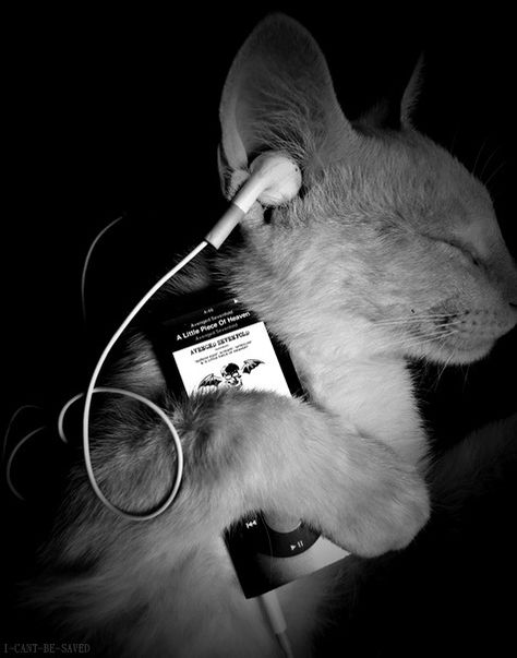 This is cute and i find it funny that the iPod is playing Avenged Sevenfold specifically A Little Piece Of Heaven.