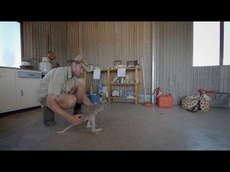Brolga bonds with baby kangaroos - Kangaroo Dundee: Episode 1 Preview - BBC Two - YouTube | Kangaroo Dundee | Pinterest | Dundee, Babies and Kangaroos