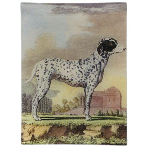 John Derian Company Inc Dogs Le Braque De Bengale Bengal