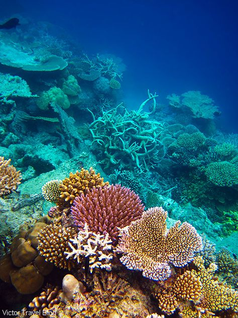 The Best Coral Reef Locations: the Maldives or the Great Barrier Reef?
