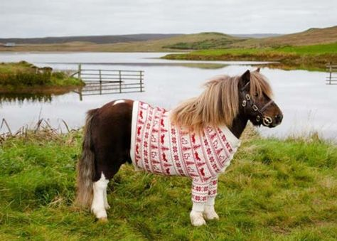 Dance Pony Dance in a Christmas Sweater | Funny Horses ...