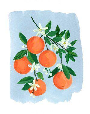 Oranges Watercolor Print by Lindsay Brackeen - orange oranges citrus tree blooms print blue watercolor print painting illustration wall art decor - Art Painting, Watercolor Print, Easy Canvas Art, Mini Canvas Art, Fruit Art, Illustration Wall Art, Gouache Art, Gouache Painting, Art
