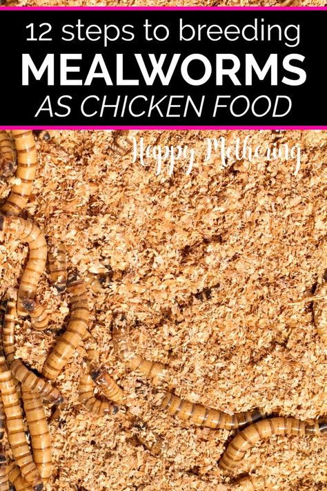 Do you want to learn how to breed mealworms? Learn about breeding mealworms for chicken food. It's a very inexpensive DIY project that chickens love. Meal Worms For Chickens, Meal Worms Raising, Keeping Chickens, Raising Chickens, Treats For Chickens, Plants For Chickens, Pet Chickens, Chicken Garden, Backyard Chicken Coops
