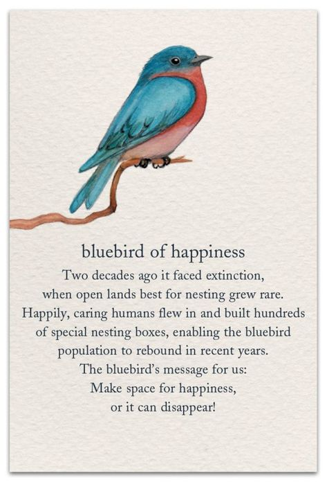 Bluebird of happiness birthday card front