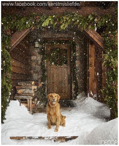 Golden Retriever Sitting In The Snow At The Back A Lodge With