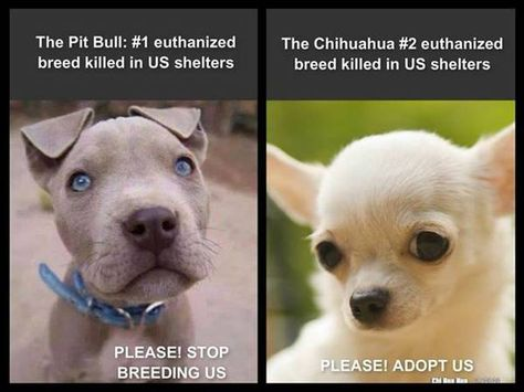 Pits And Chis Are Most Killed Animal Protection Quotes Animal Shelter Quotes Dog Training Near Me
