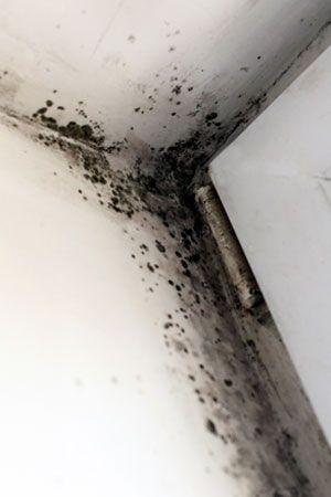 Black Mold In Bathroom Apartment best 20+ remove black mold ideas on pinterest   shower mold