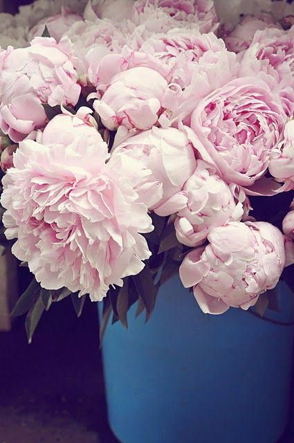 Peonies Pronunciation Peonies Growing Peonies Flowers By Post Flowers