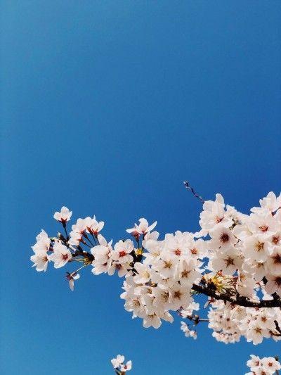 Robert Koehler Travel Photography In 2020 Cherry Blossom Beautiful Flowers Blossom