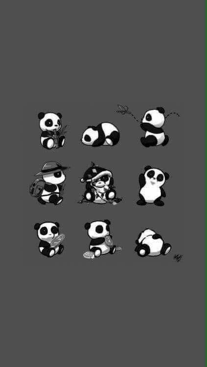 Cute Little Panda Cute Panda Wallpaper Panda Wallpapers Panda Wallpaper Iphone