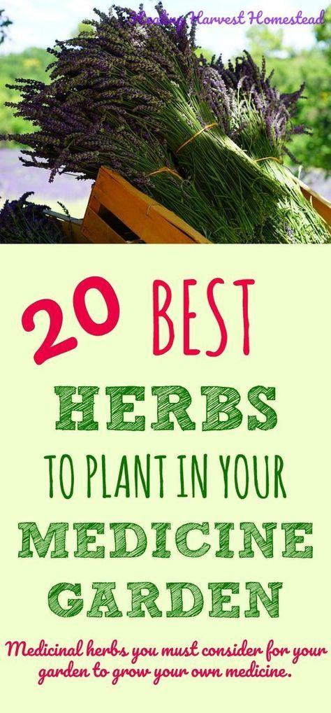 20 Medicinal Herbs To Grow In Your Healing Garden Make Your Own