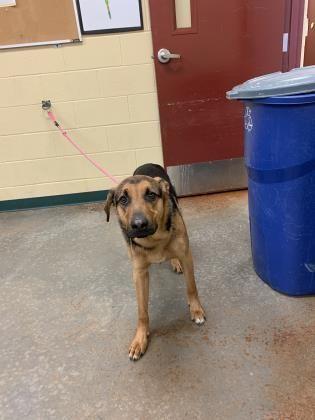 Dogs For Adoption Petfinder In 2020 Adoption Dog Adoption Dogs