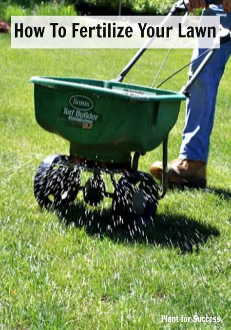 How To Fertilize Your Lawn Lawn Treatment Fall Lawn Care Lawn
