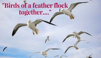 a paragraph on birds of same feather flock together