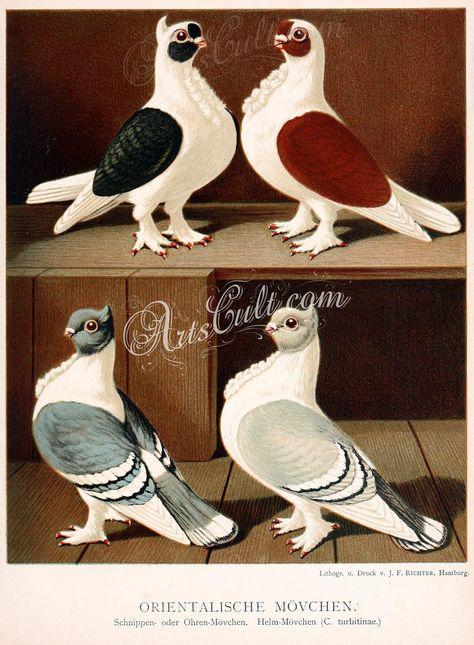 Komorner Tumbers  Pigeon  Refrigerator Tool Box Magnet