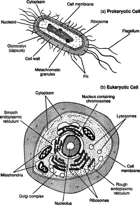 Prokaryotic And Eukaryotic Cells Are Similar In Several Ways Prokaryotes Eukaryotic Cell Prokaryotic Cell