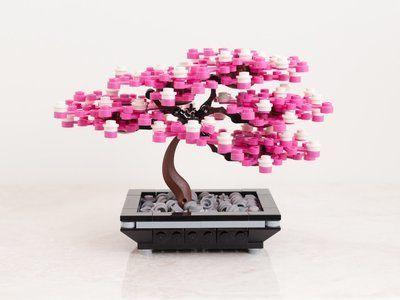 Emperor Bonsai Cherry Blossom V1 1 Bonsai Indoor Plants Cherry Blossom