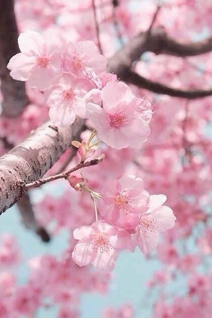 Pin De Trying To Be Aesthetic En Collages Flor Estetica Fondos De Flores Fondos De Pantalla De Primavera