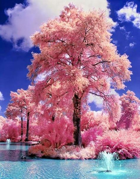 Japanese Water Gardens - gorgeous!