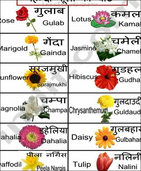 Best Of 10 Flowers Names In Hindi And English And Review In 2020 Flower Chart Hindi Language Learning Hindi Alphabet
