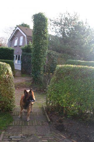 Haus Angelika Mit Garten In Domburg In 2020 Ferienhaus Holland Mit Hund Ferienhaus Zeeland Und Urlaub Mit Hund