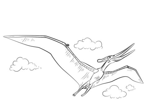 Pteranodon Flying Coloring Page From Pteranodon Category Select