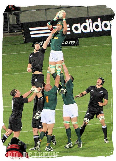 The Springboks winning the ball in a line out against the All Blacks of New Zealand - Springbok rugby in South Africa and the South Africa rugby team