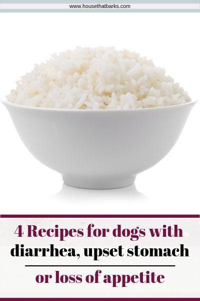 Upset Tummy And Diarrhea Recipe Dog Food Recipes Dog Treat