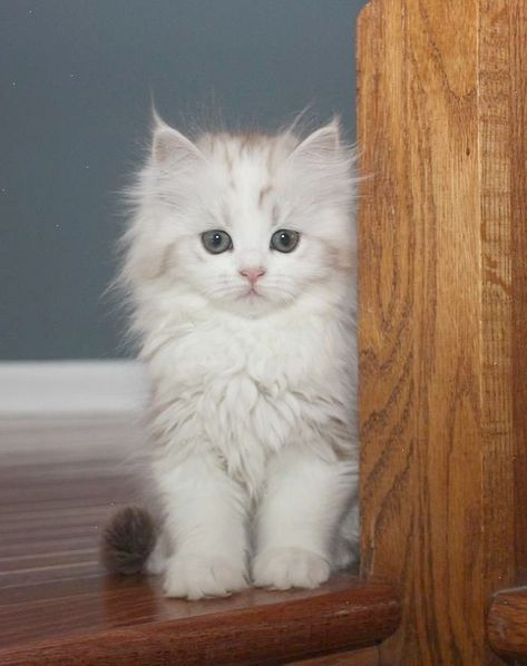 Pin By Allysa Tolbert On Pets Kittens Cutest Cute Cats Cute