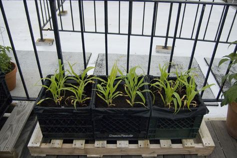 milk crates + synthetic landscape fabric = cheap and light gardening containers