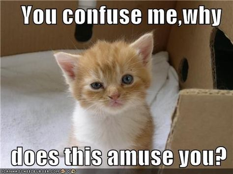 e3aa685678cc657ccfdcd50c74ef1be9 funny kitties kitty cats you confuse me,why does this amuse you? confused, animal humour