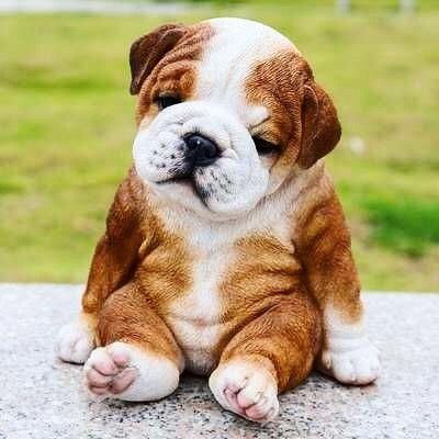 Puppys Puppy Puppies Puppiesofinstagram Doggos Doglife