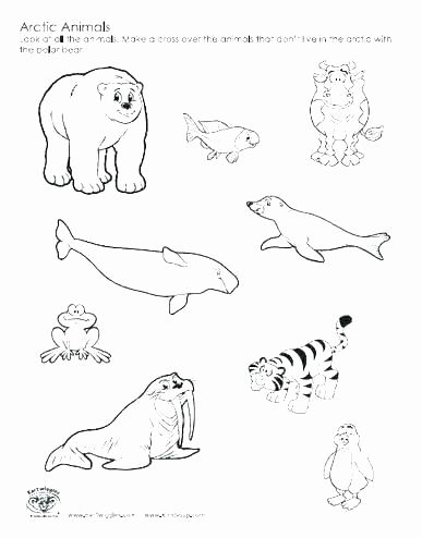 Arctic Animal Coloring Page Fresh Antarctica Coloring Page Icpixls Animal Coloring Pages Zoo Coloring Pages Polar Bear Coloring Page