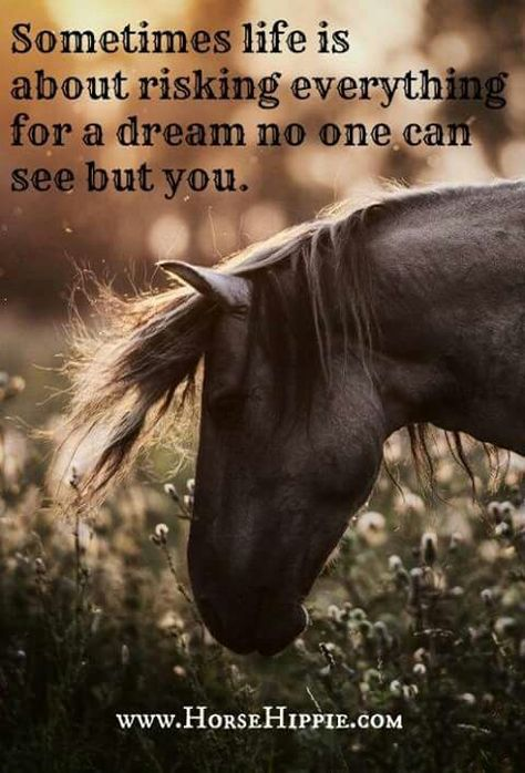 Life's risks for a dream Source Cute Horses, Horse Love, Horse Girl, Beautiful Horses, Western Quotes, Cowboy Quotes, Country Girl Quotes, Equine Quotes, Equestrian Quotes
