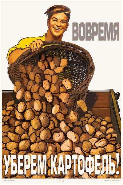 Уборка картошки веселые картинки, лего ниндзя