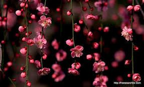 Image Result For Girly Wallpapers For Windows 10 Flower Desktop Wallpaper Spring Flowers Wallpaper Pink Flowers Wallpaper