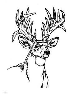 Deer Coloring Page Deer Nozhi Trafarety Raskraski