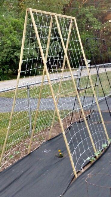 Cucumber Trellis Homemade Wood From Home Depot 14 Net From Amazon 5 Cucumber Trellis Vertical Garden Trellis
